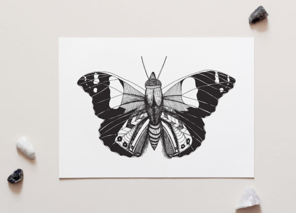 Butterfly Art Print by NZ Artist Penny Royal