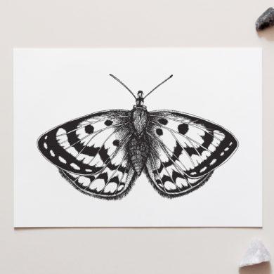 Spotty Moth Art Print by NZ Artist Penny Royal